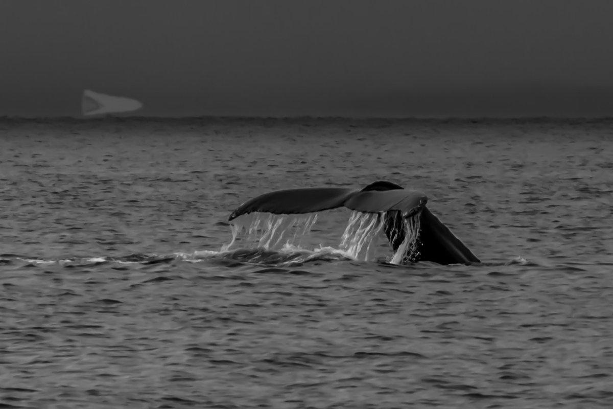 морской кит - Георгий
