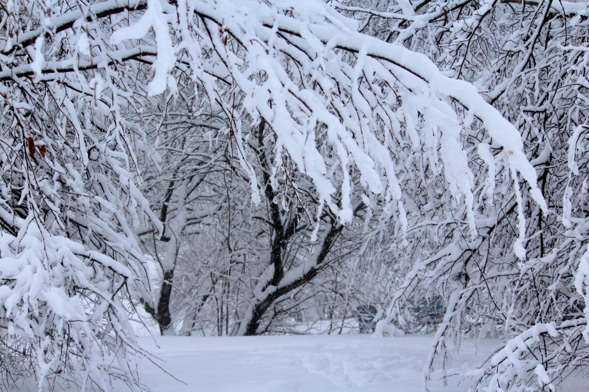 Снежные лапы! - Жанна