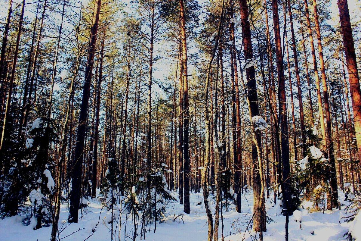 Зимой в лесу - Сергей Кочнев