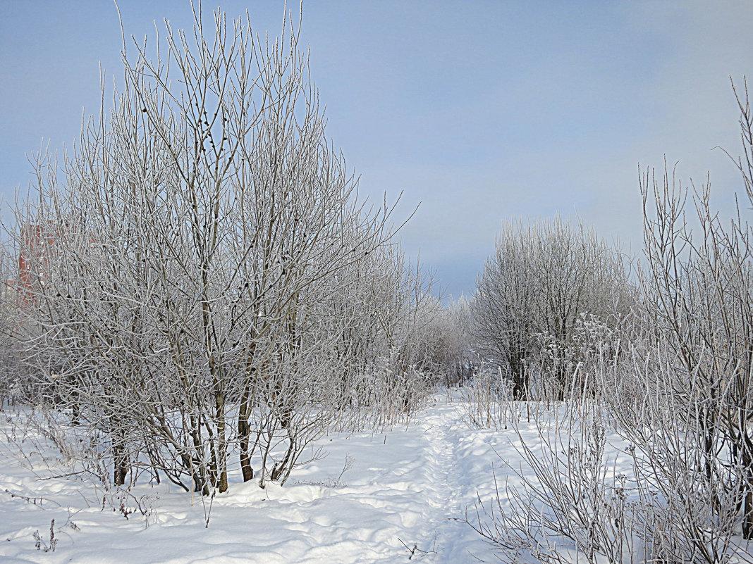 Зимняя природа. - Валентина Жукова