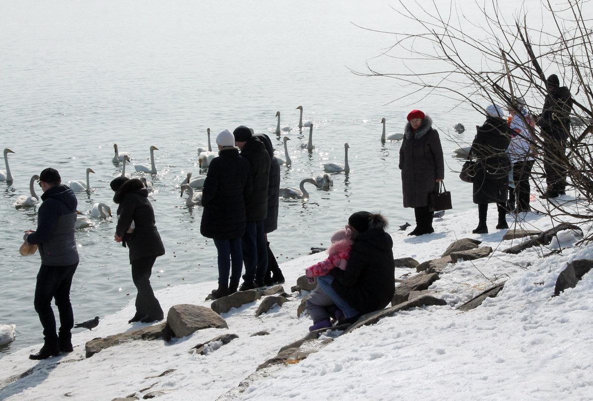 Пришли посмотреть на лебедей - Олег Афанасьевич Сергеев