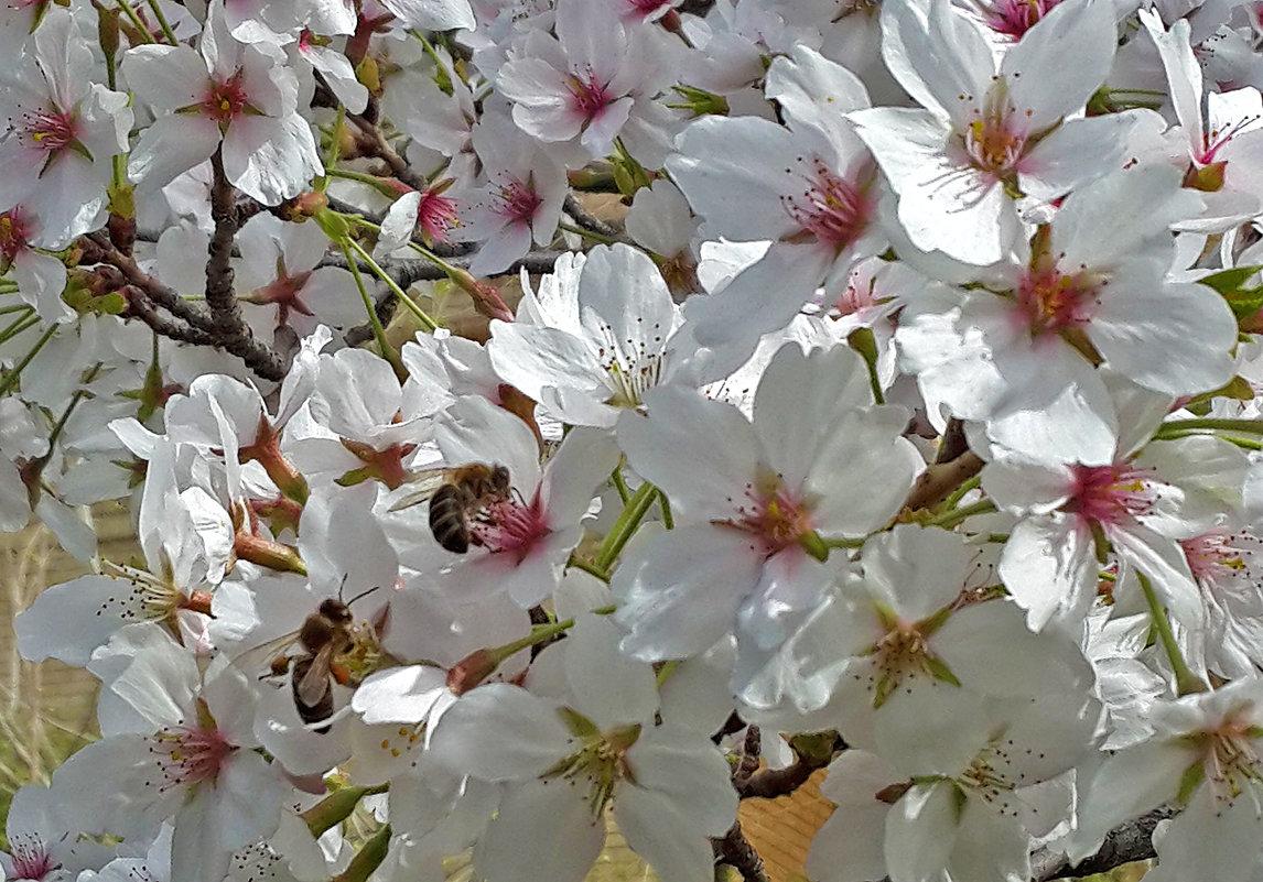 Весна... - Светлана