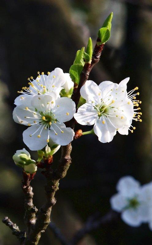 Апрель (цветы и листья). - Dad