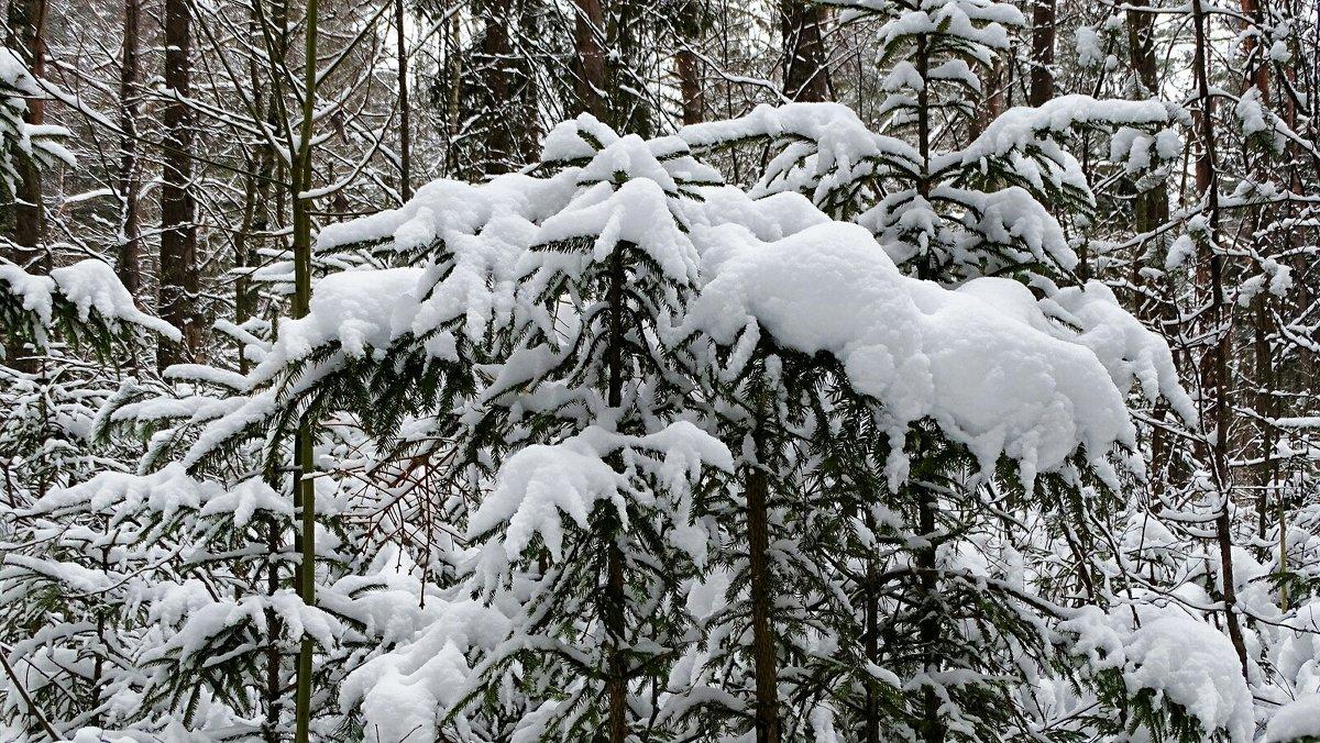 О минувшей зиме - Милешкин Владимир Алексеевич