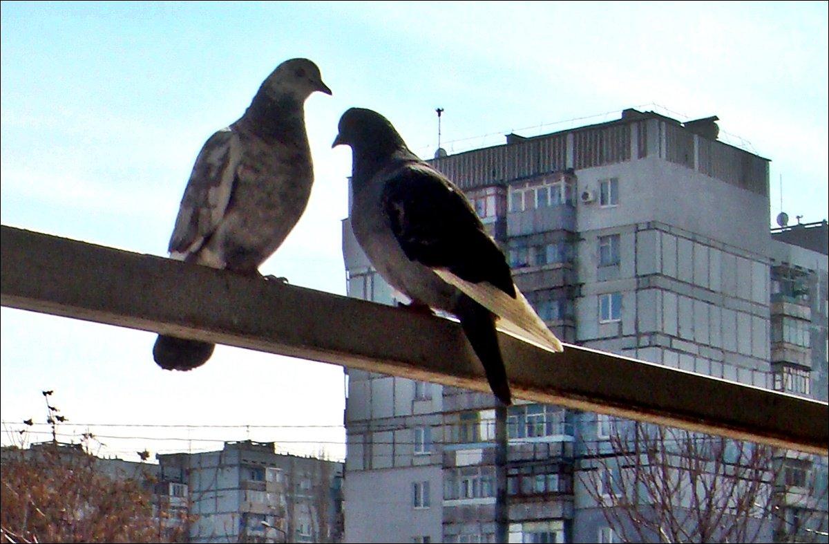 Весеннее свидание - Нина Корешкова