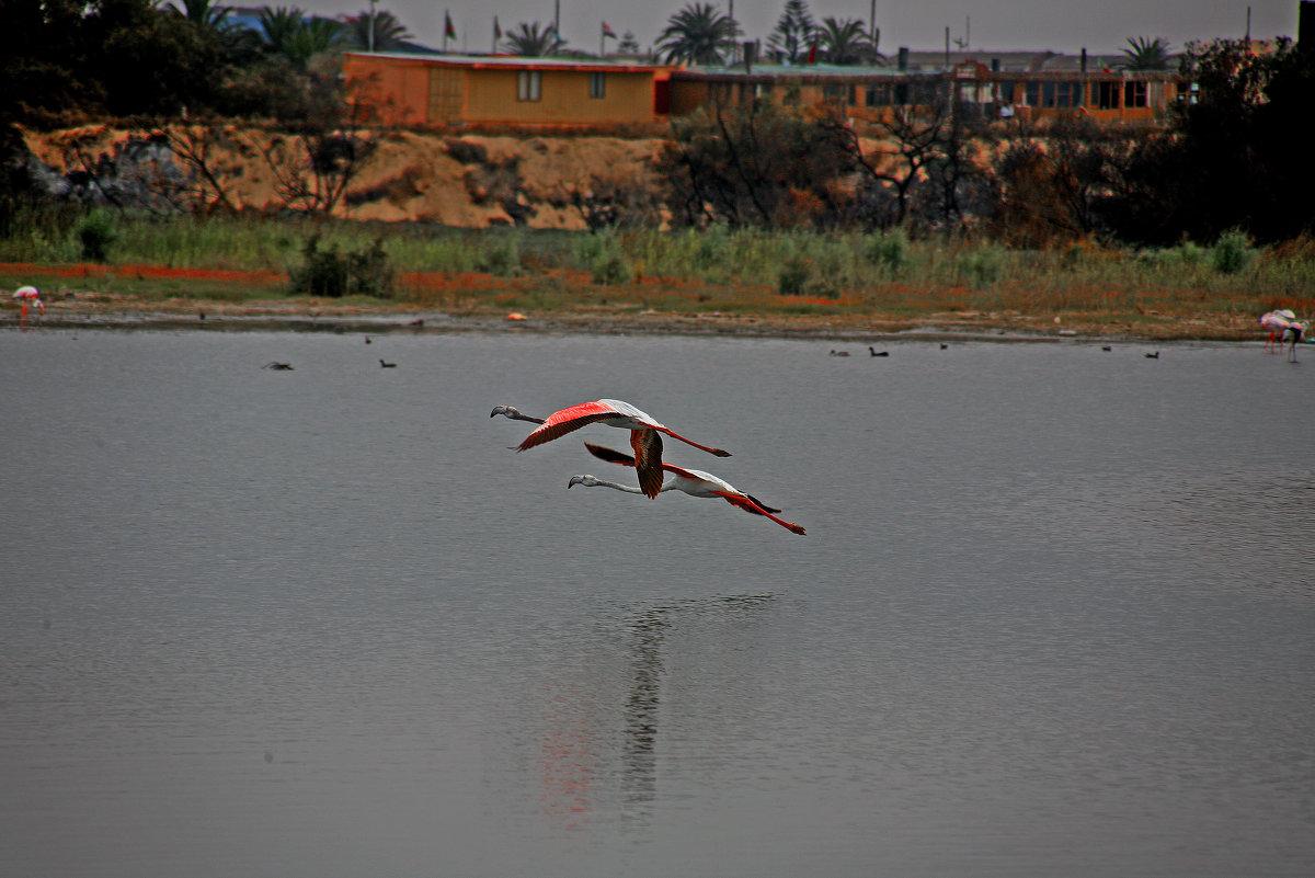 Фламинго - Jakob Gardok
