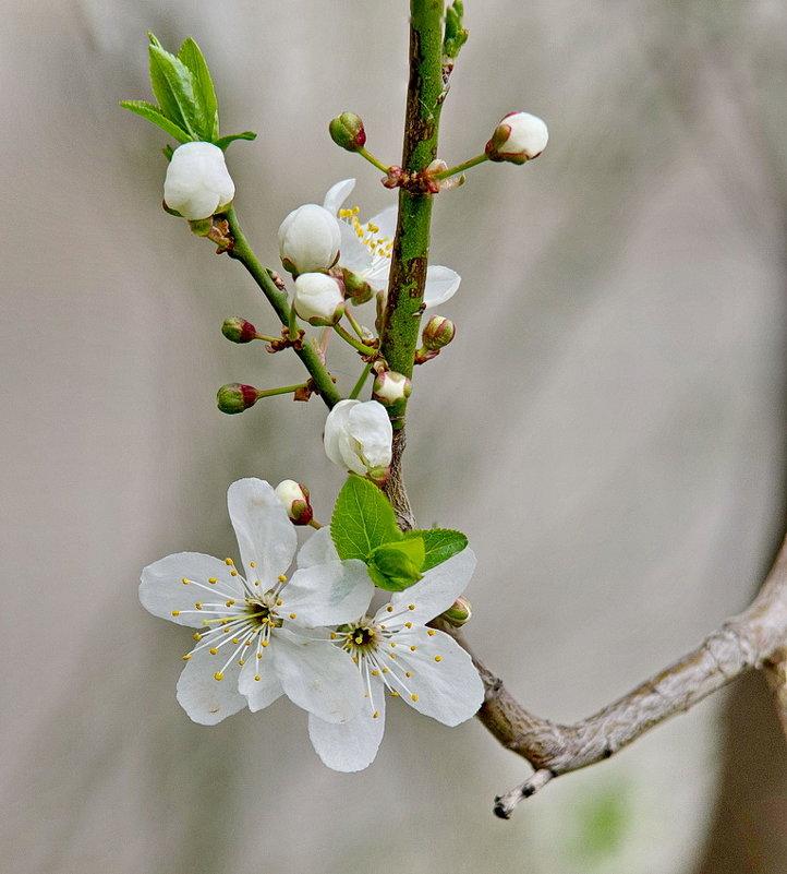 Весна - НИКОЛАЙ .
