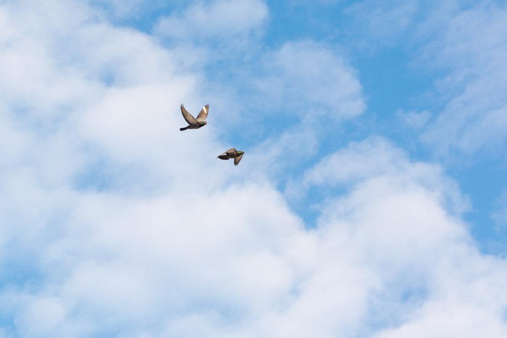 Голуби в облаках - Татьяна Золотых