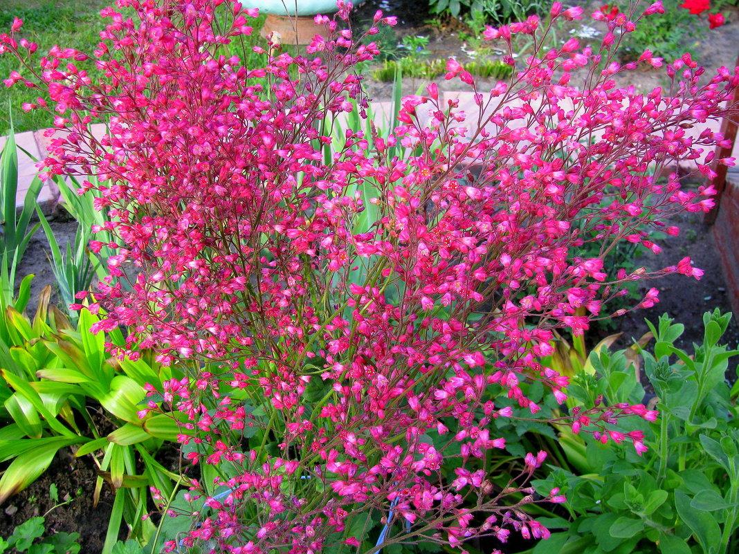 Цветы июля - Марина Таврова