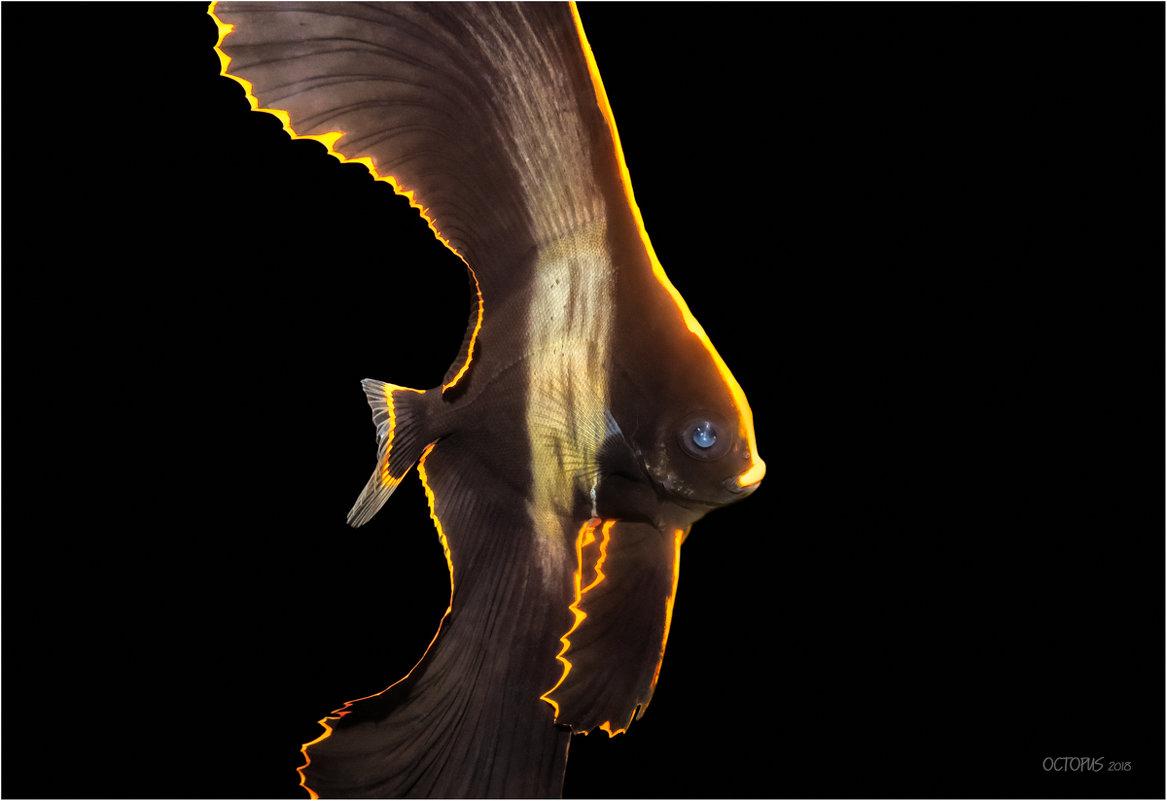 Летучая мышь - алексей афанасьев