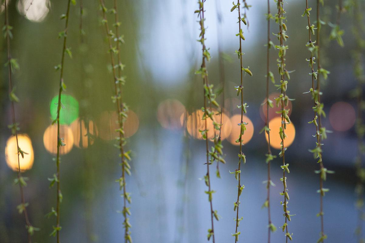 Весна в Киото. Япония - Алексей Саломатов