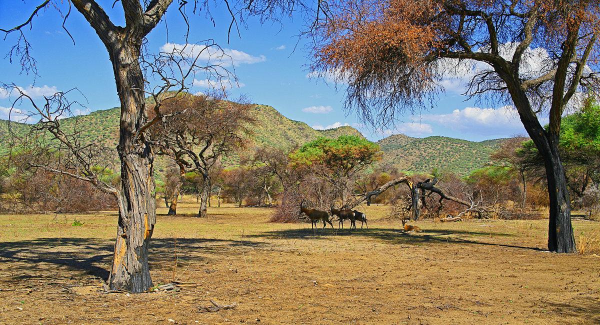 Африканский Пейзаж. - Jakob Gardok