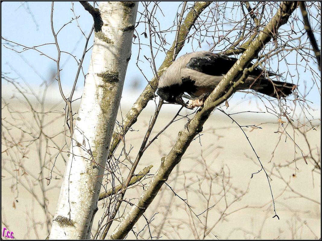 Ворона что-то...где-то.... - Сергей Гончаров