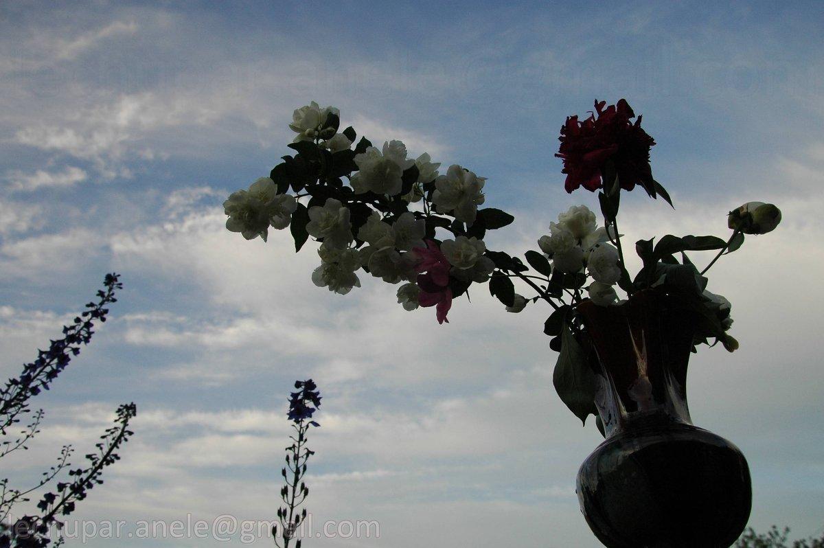 Цветы в вазе - Elena Gosteva