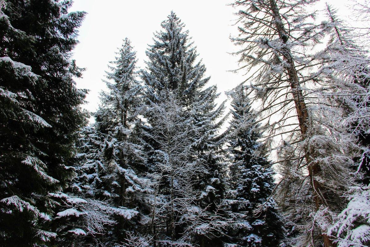 Ждем Зимушку снова , и горнолыжный сезон ! - Вячеслав Случившийся