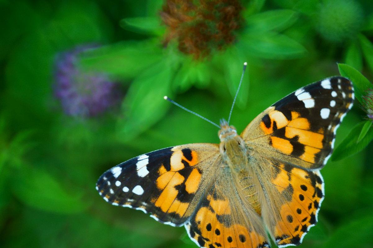 Бабочка - Стас