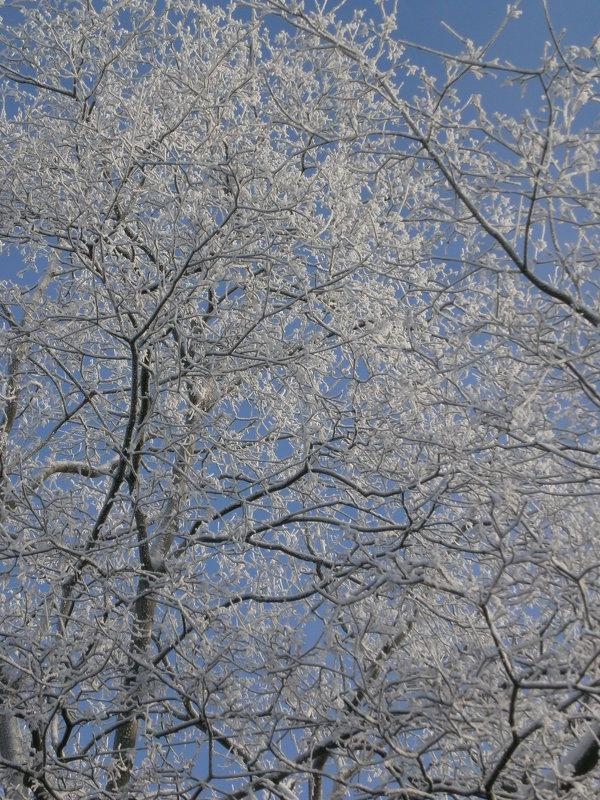 Зимние кружева - Алёна Савина
