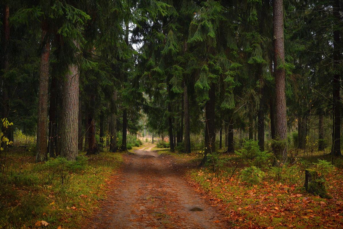 Осень в зелёном лесу - Алексей (GraAl)