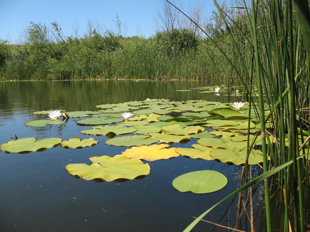 Тихое озеро - Владимир