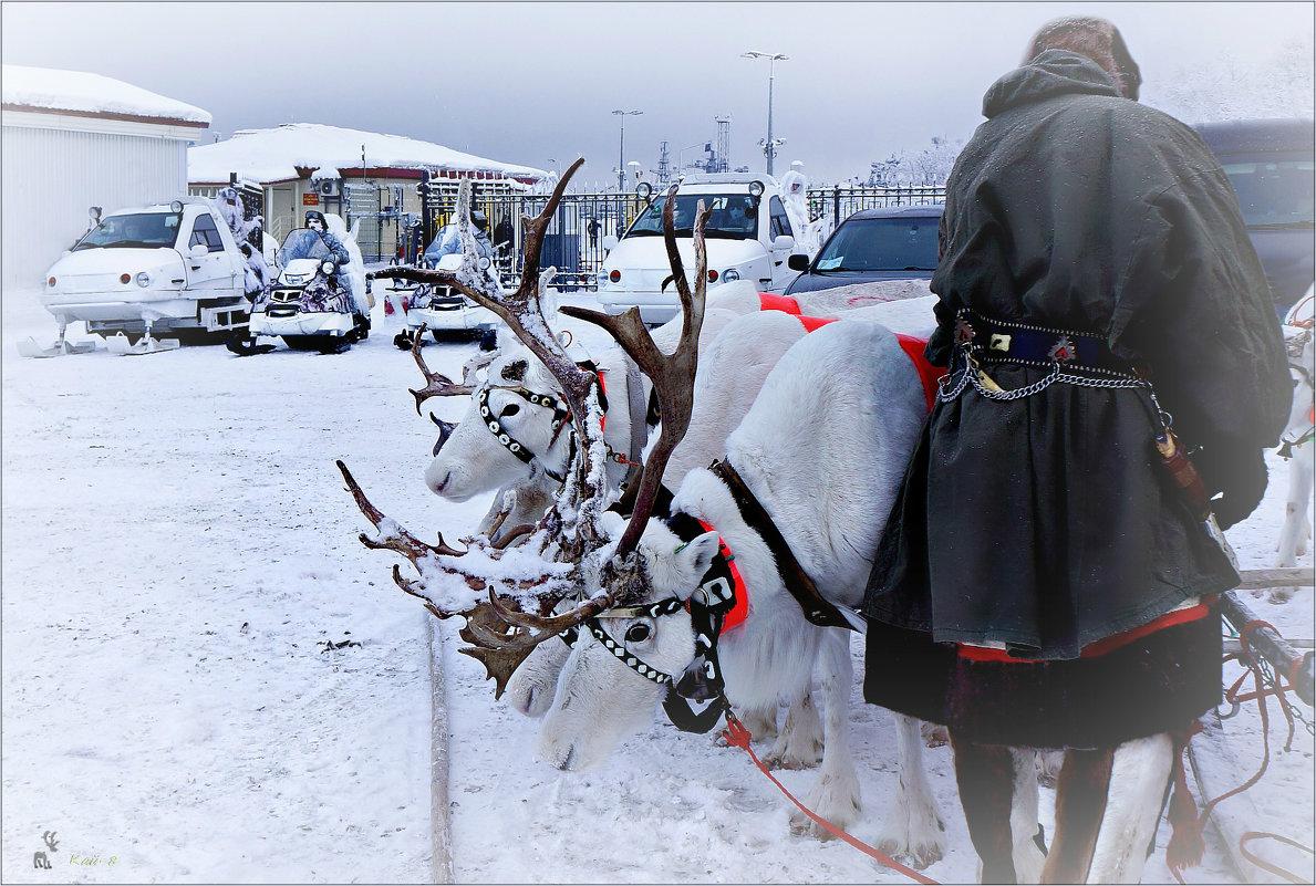 Арктика. Снегоходы - Кай-8 (Ярослав) Забелин