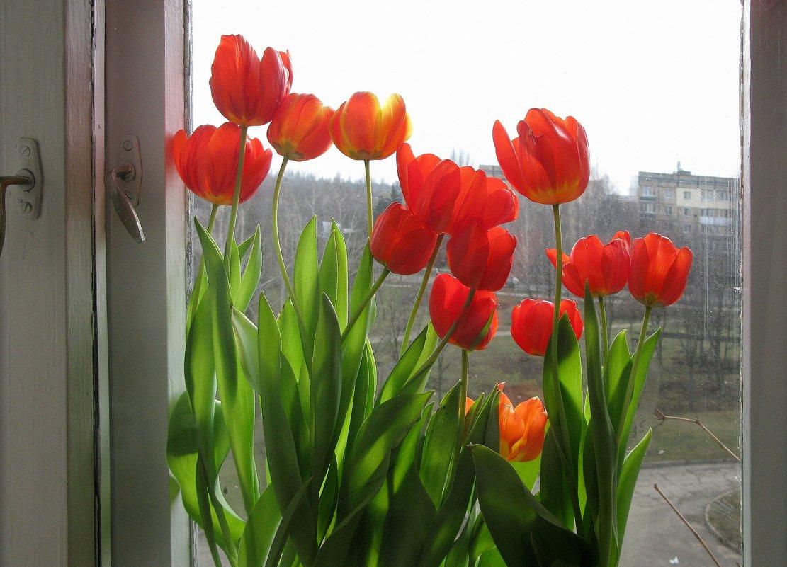 Моя рукотворная весна - super-krokus.tur ( Наталья )