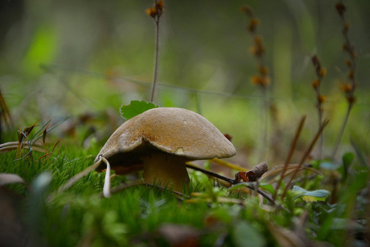 В лесных травах - Алексей (GraAl)