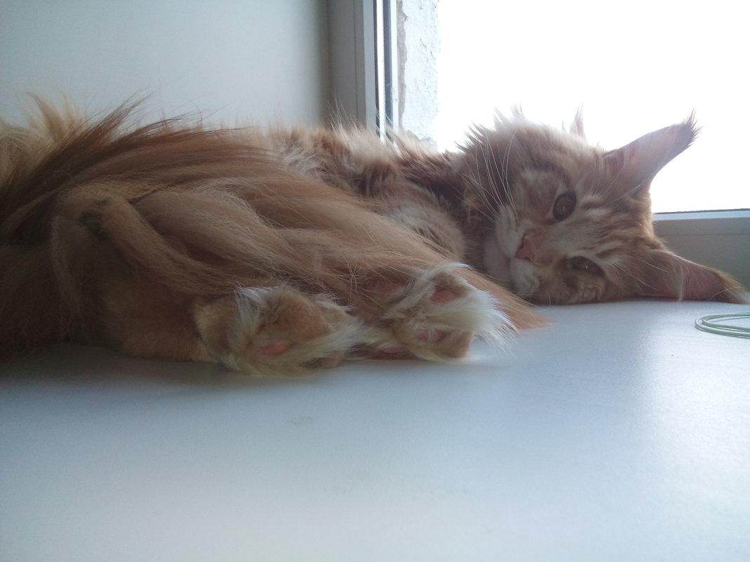 dear cat - Lidiya