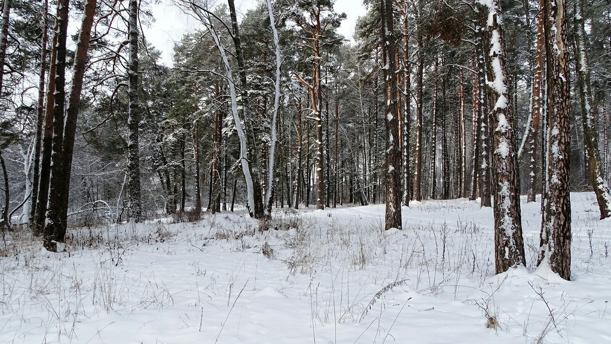 Картинка минувшей зимы - Милешкин Владимир Алексеевич
