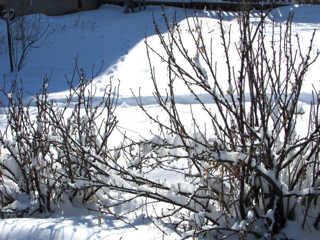 Последний день марта порадовал погодой))) - Светлана