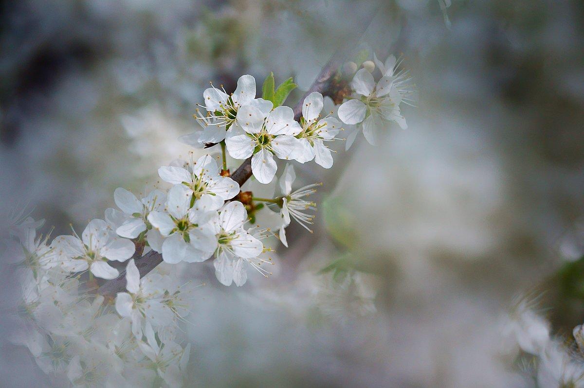 весна - Стас
