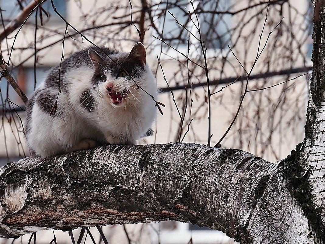 Весны этюды. Вчера наконец-то хоть коты прилетели... - Александр Резуненко