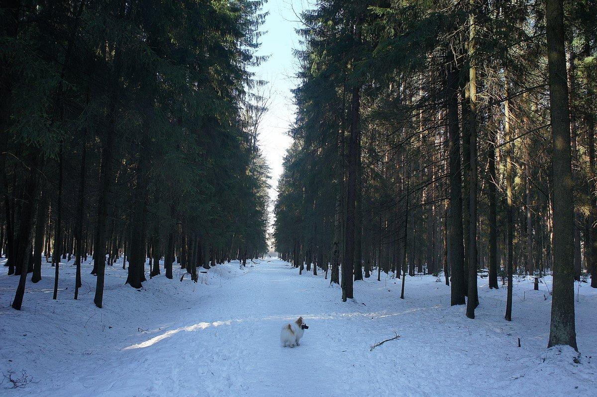 Последний день марта в Ржевском лесопарке - Елена Павлова (Смолова)
