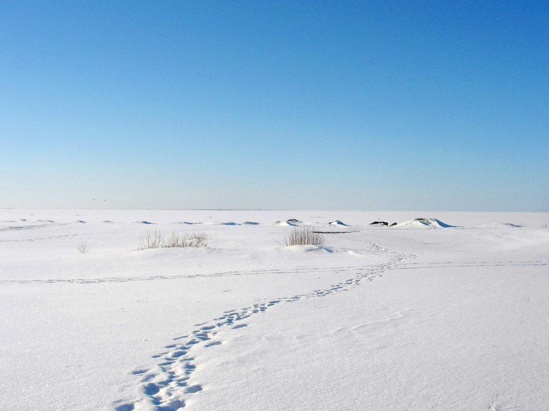 В Антарктиде льдины землю скрыли )) - Лия ☼