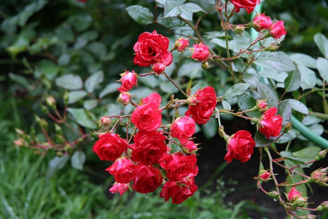 Красный сад - Екатерина