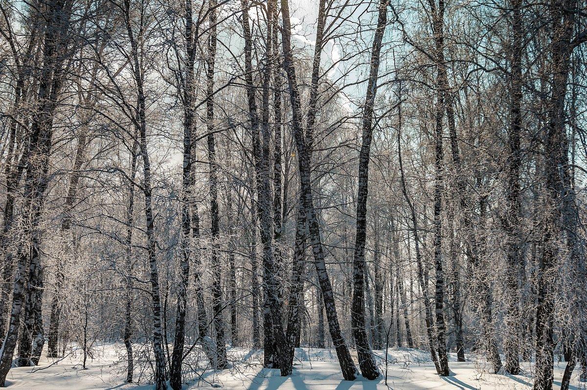 Зимний лес - Владимир Деньгуб