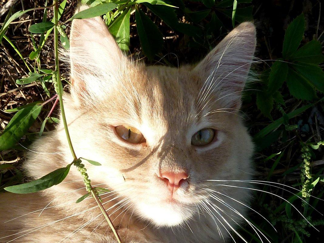 Солнечный портрет!... - Лидия Бараблина