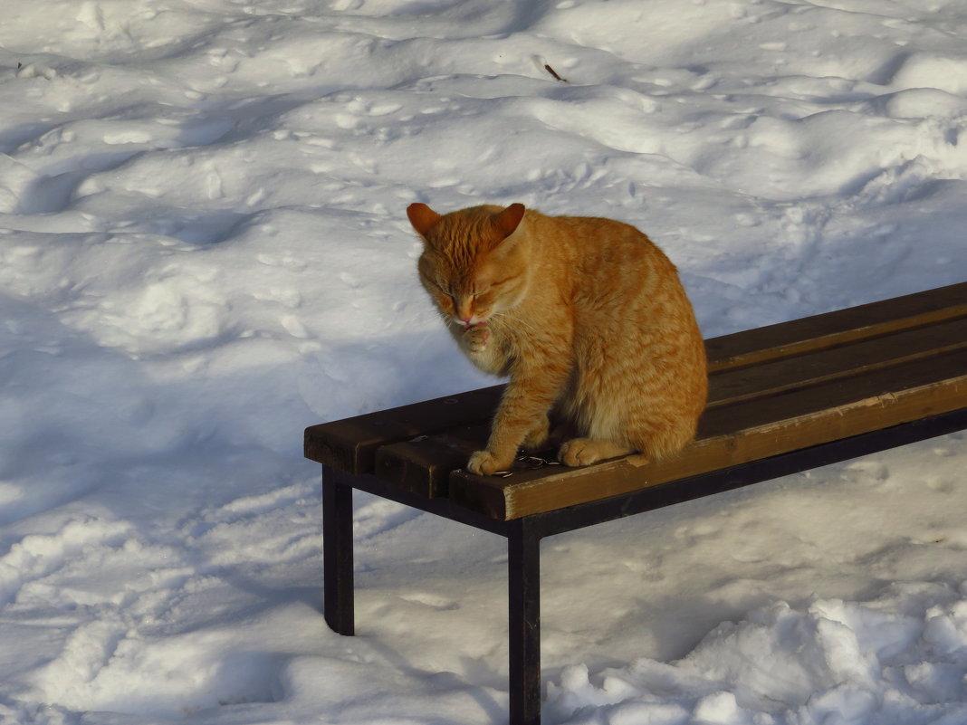 Мартовский кот - Андрей Лукьянов