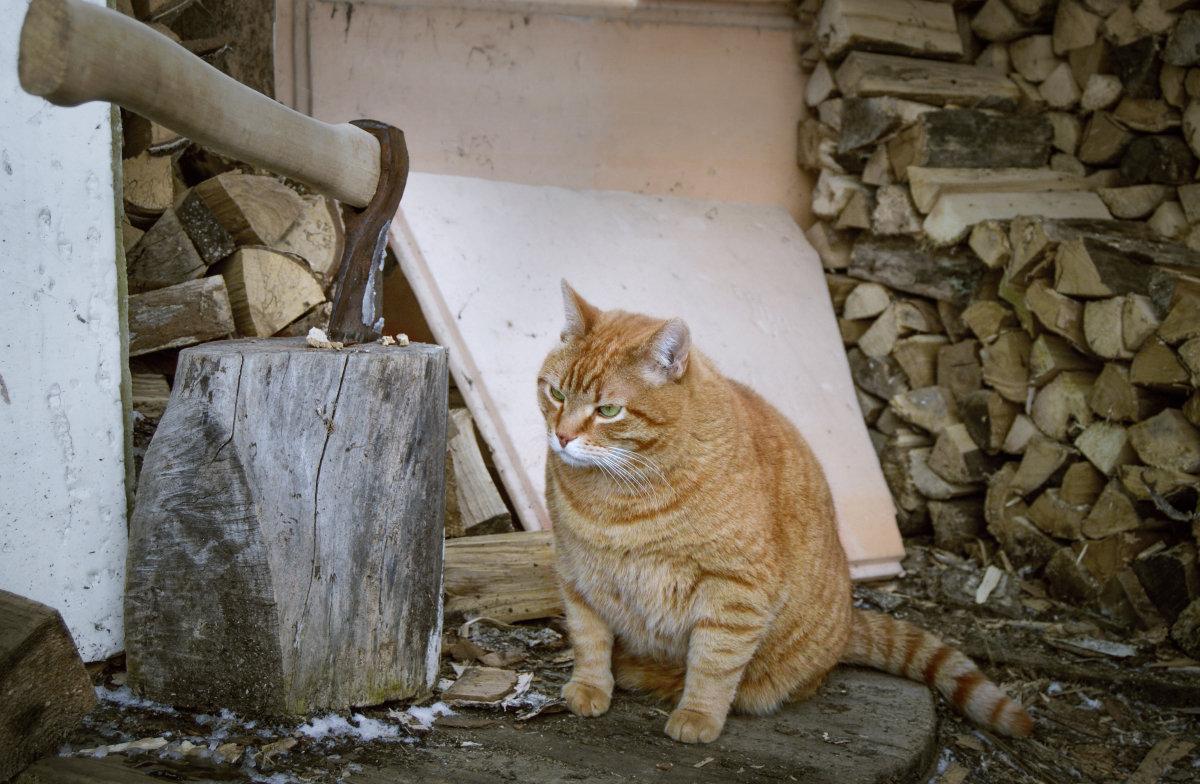 Кот мясника - Ирина Полунина