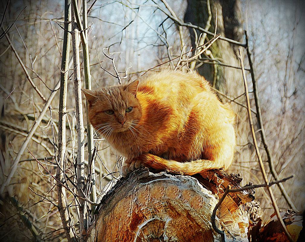 На весеннем солнышке - Мария Богуславская