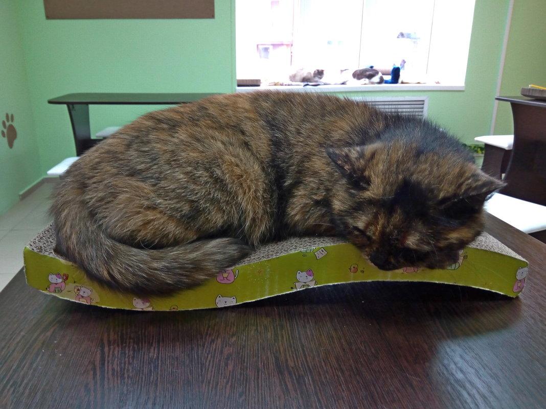 Кошка из котокафе - Andrew
