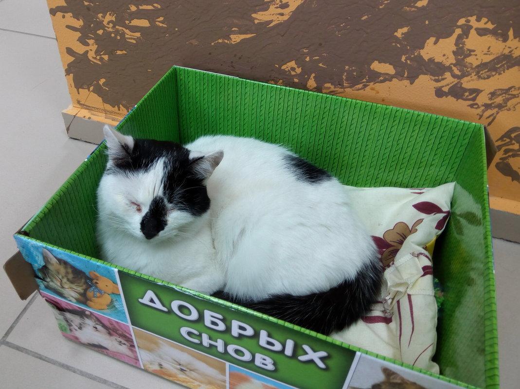 Кот из котокафе - Andrew