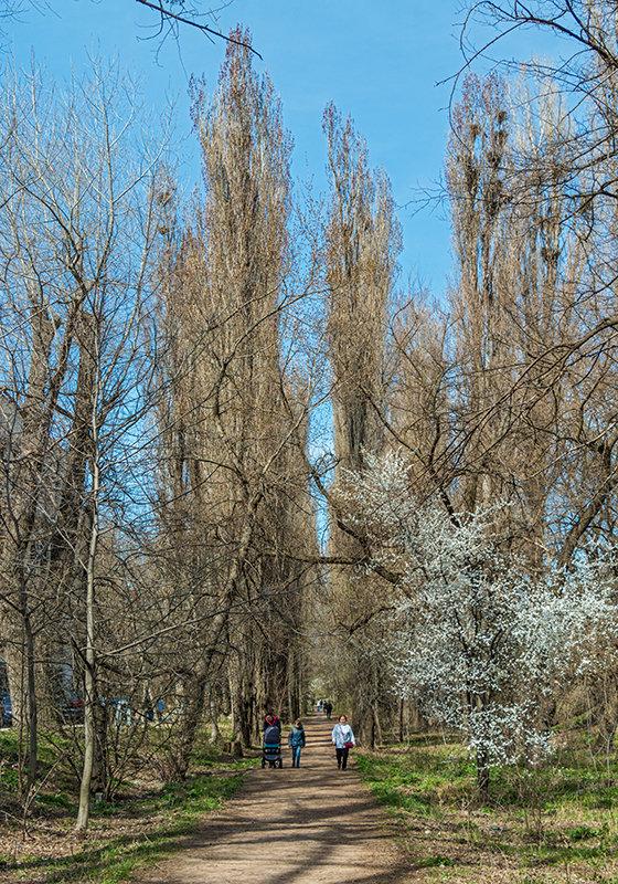 Начало весны в аллеях - Юрий Яловенко