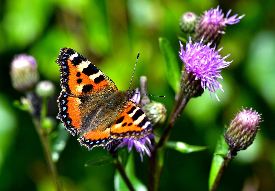 Бабочка - Oleg S