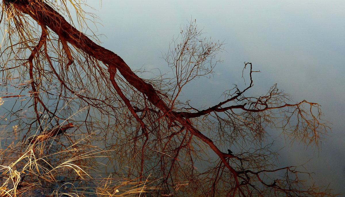 отражение дерева - Александр Прокудин