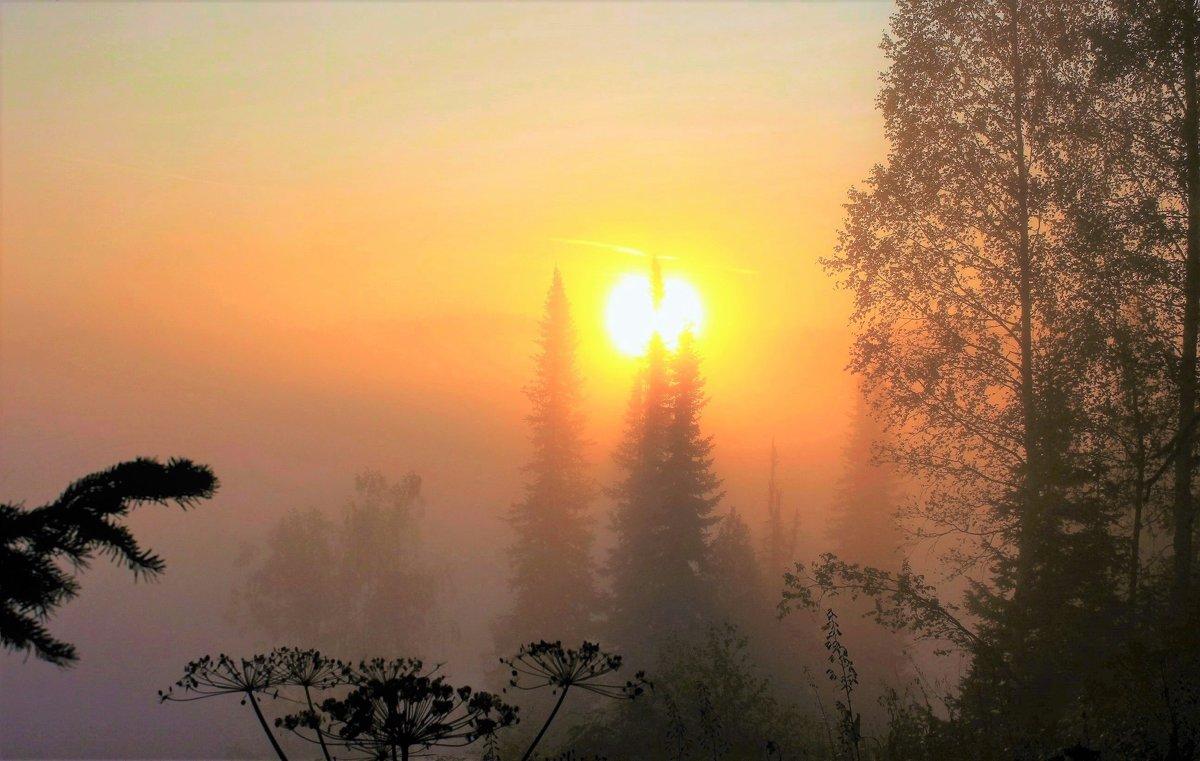 Солнце будит сонный лес - Сергей Чиняев