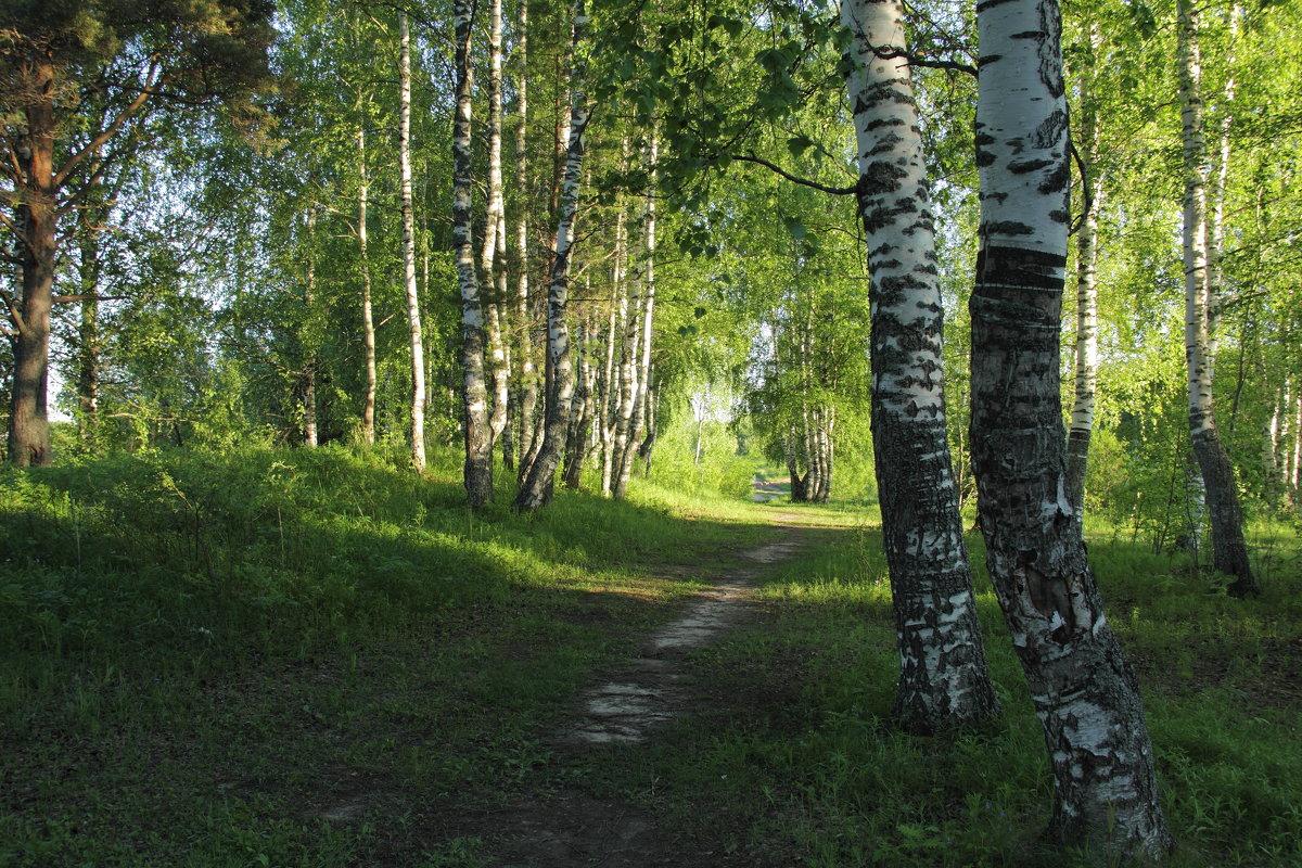 Прогулка по лесу. - Андрей Дурапов