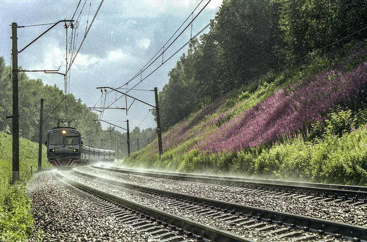 Буйное цветение кипрея в июле. - Игорь Олегович Кравченко