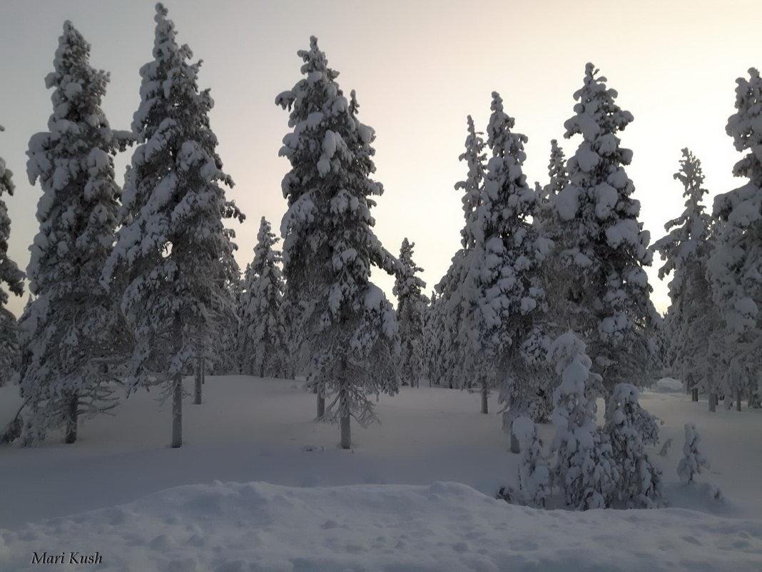 Швеция - Mari Kush