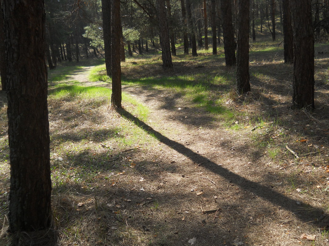 Свет и тень или На лесной тропинке - Галина