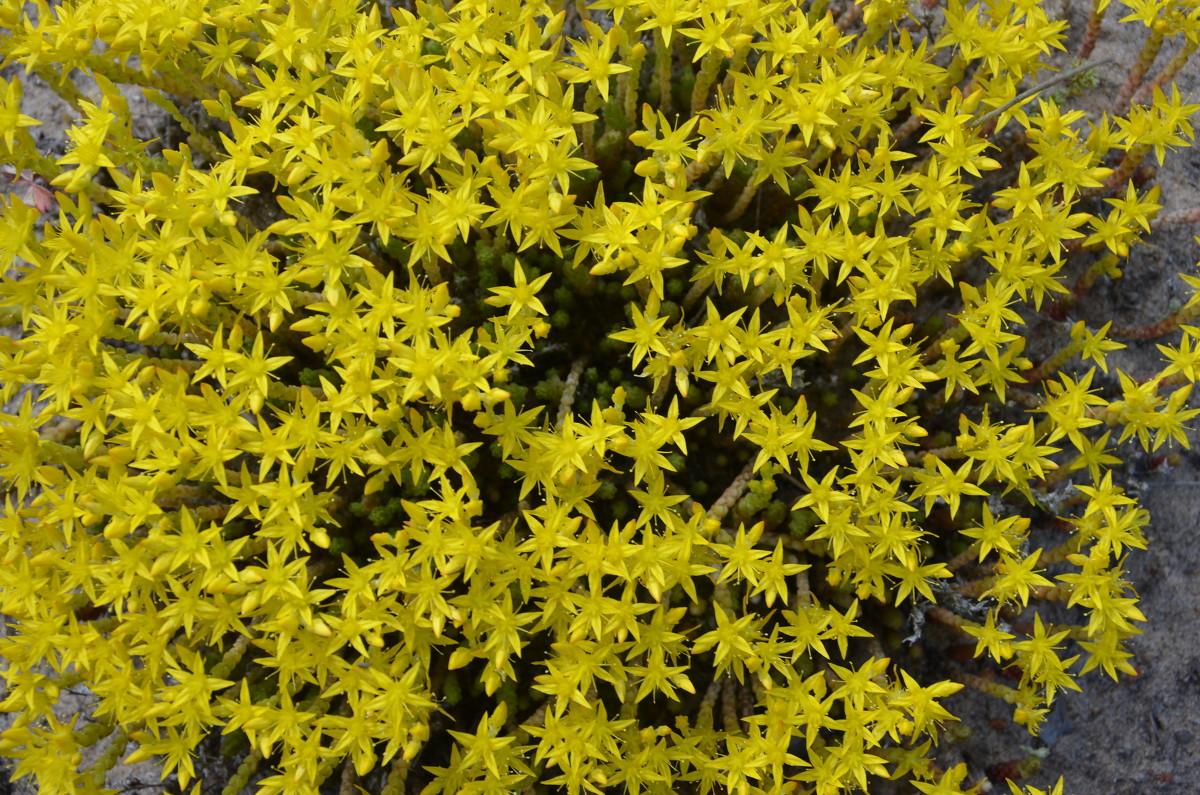 Мох цветы